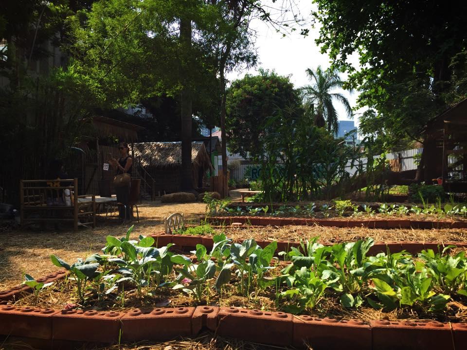 ROOT GARDEN CAFEの菜園